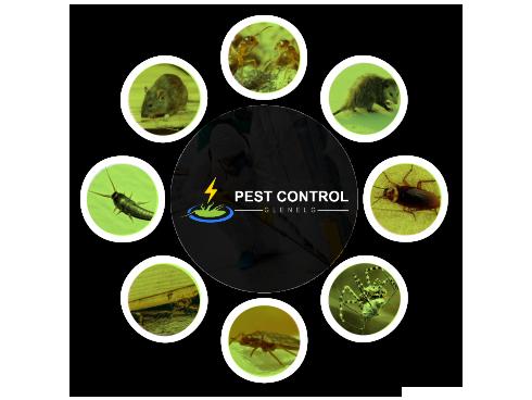 Pest Control Glenelg
