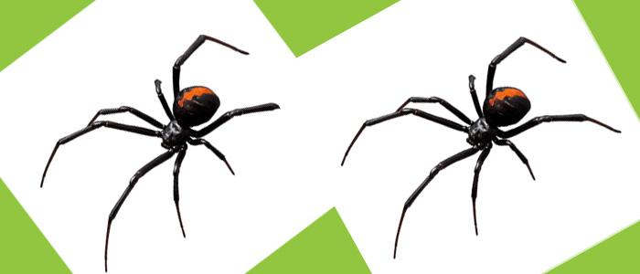 Spider Control Glenelg