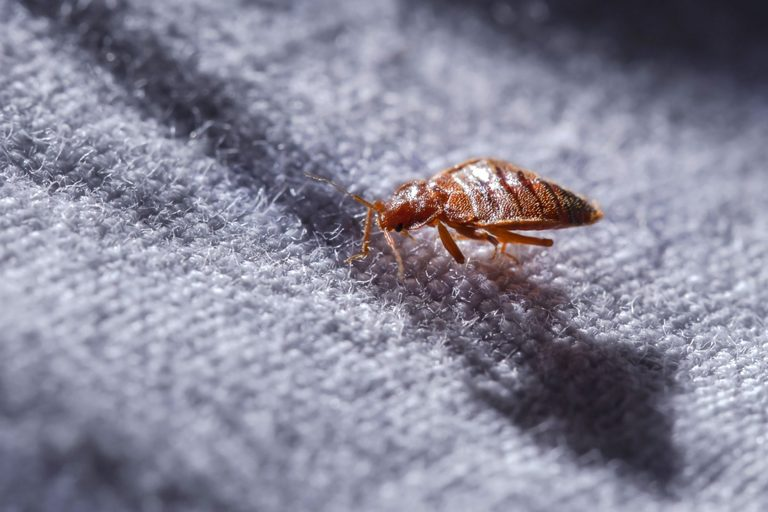Bed Bugs Control Glenelg